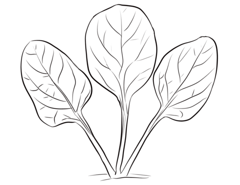 Spinach clipart black and white. Leaves coloring page free