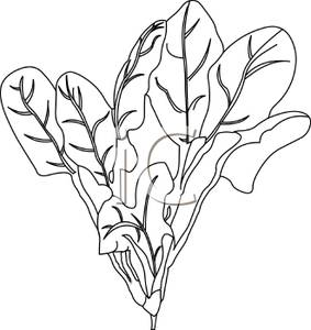 Spinach clipart cartoon. Black and white leaves