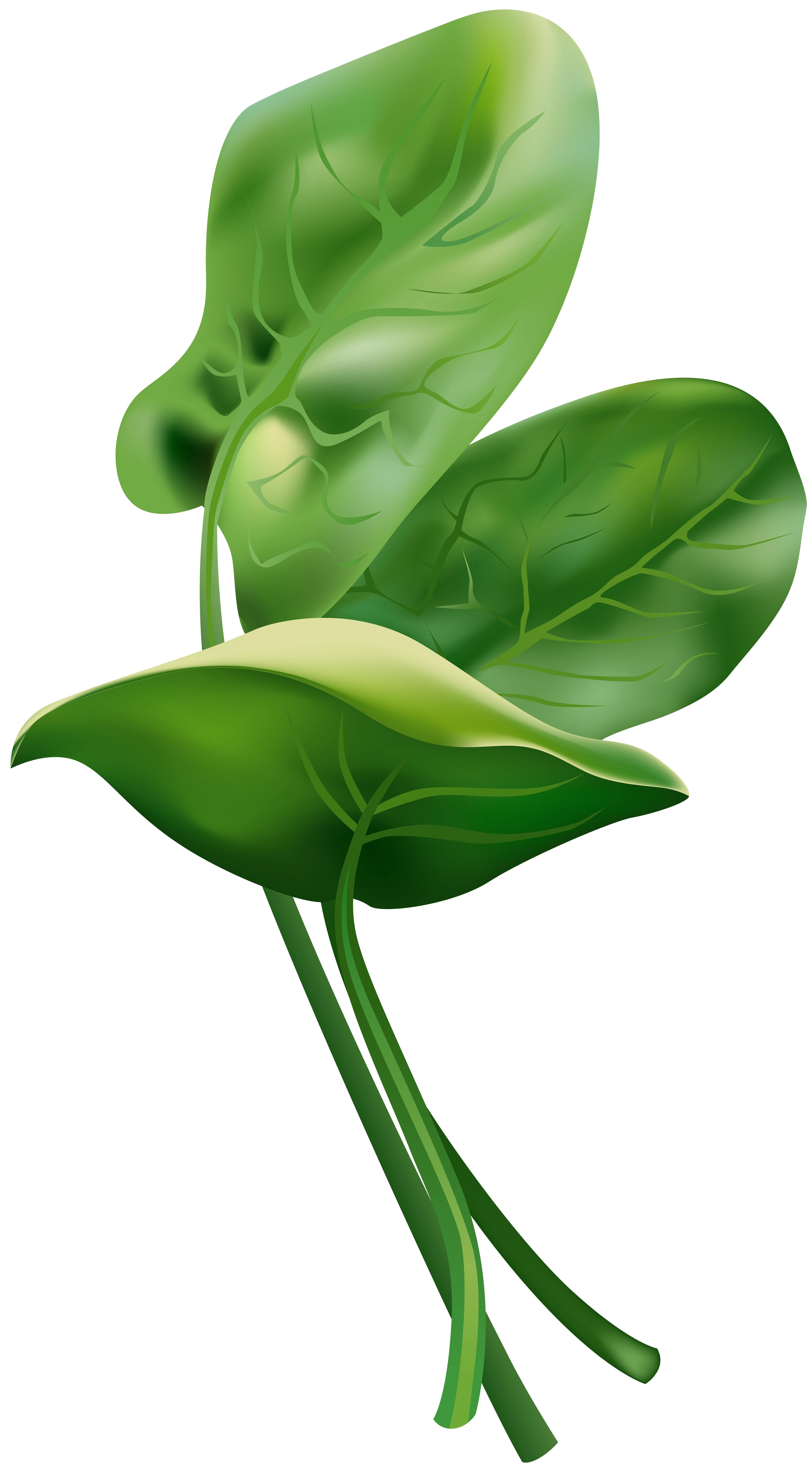 Spinach clipart clip art. Free png image gallery