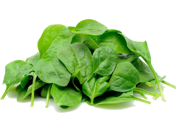 Spinach clipart palak. Png images transparent free