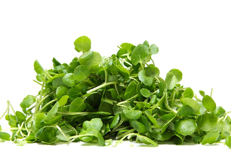 Spinach clipart watercress. Barmac pty ltd