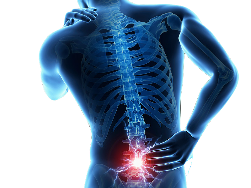 Spine back png. Neck st mary s