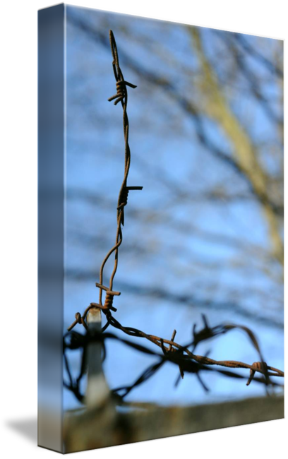 Spine barbed wire png. Barbwire on fence by
