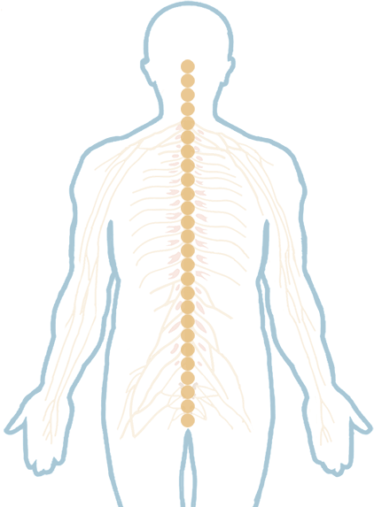 Spine png. Interactive nuspine chiropractic