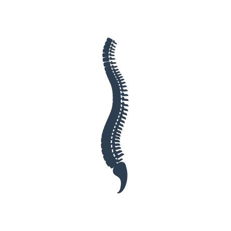 Spine png. Dr seiichiro ando