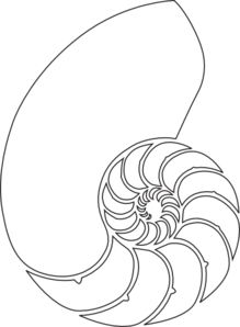Spiral clipart shell nautilus. Outline clip art at