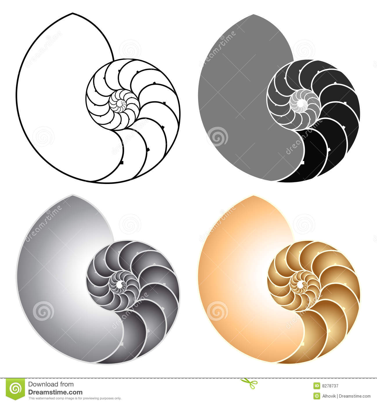 Stock vector illustration of. Spiral clipart shell nautilus png black and white download