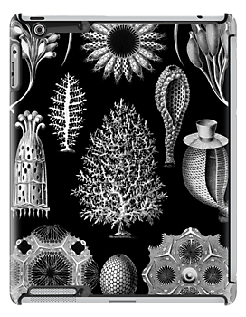 Sponges drawing under sea. Calcareous in black and