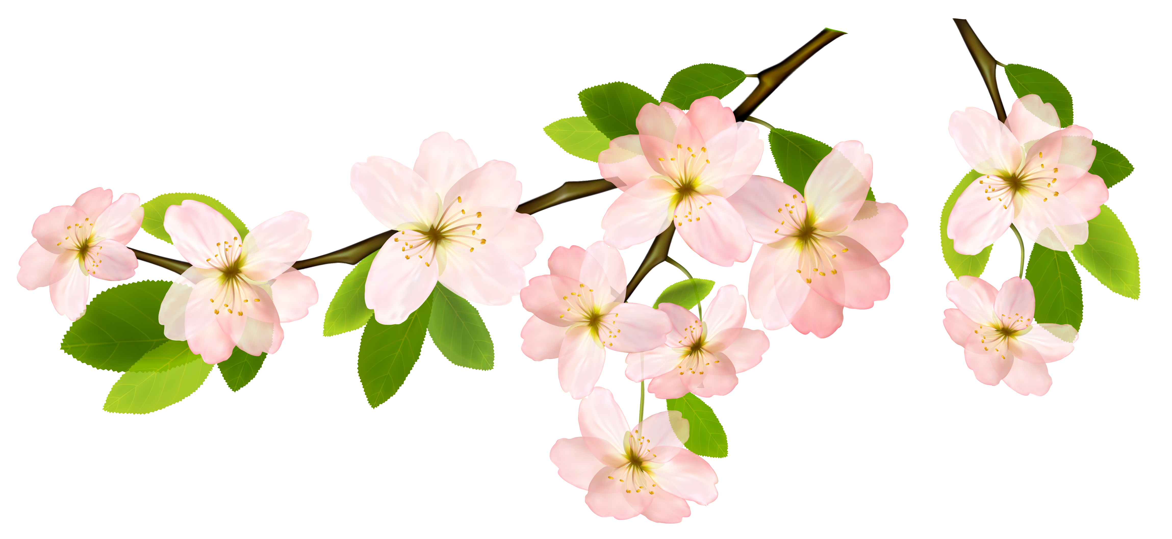 Spring clipart garland. Branch png picture leaves