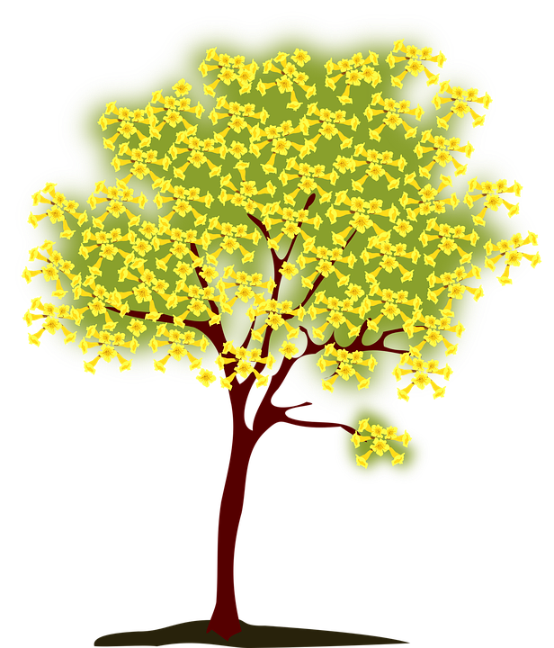 Spring clipart nature. Free photo yellow tree