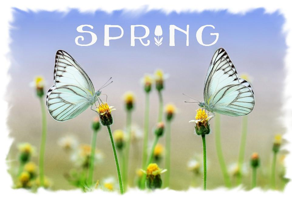 Spring clipart. Pieces discovery center store