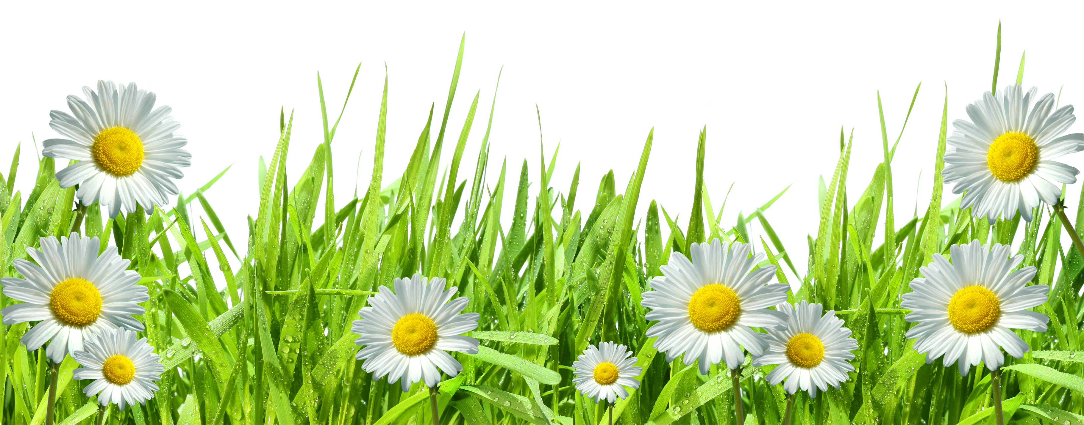 Spring flower border png. Large transparent grass with