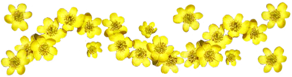 Spring flowers border png. Clipart flower pictures of