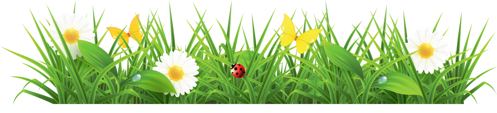 Spring flower border png. Collection of clipart