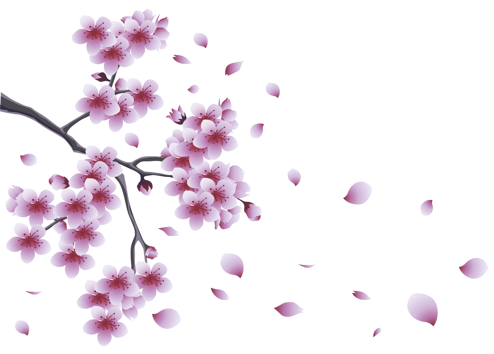 Spring flowers transparent png. Images all pic