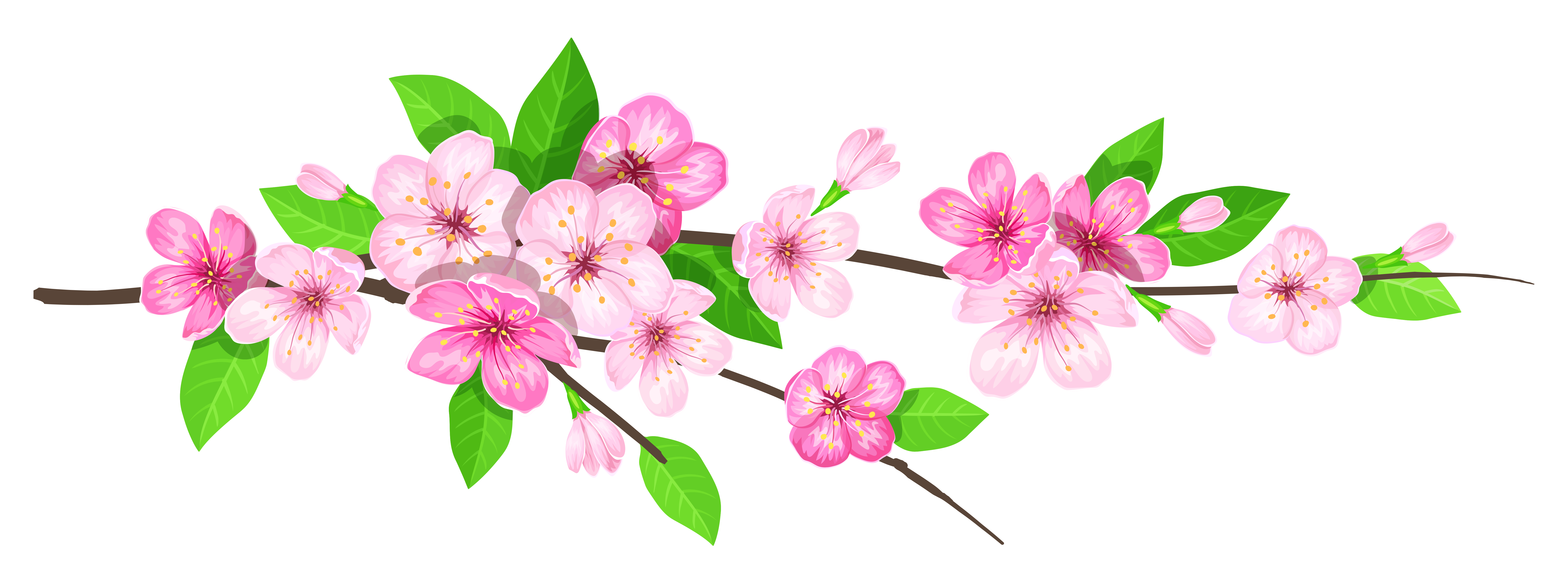 Spring png. Pink branch image gallery