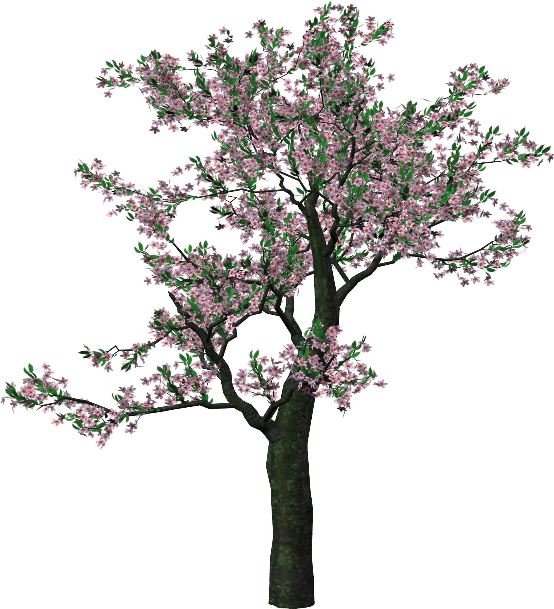 Spring tree png. Large clipart gallery yopriceville