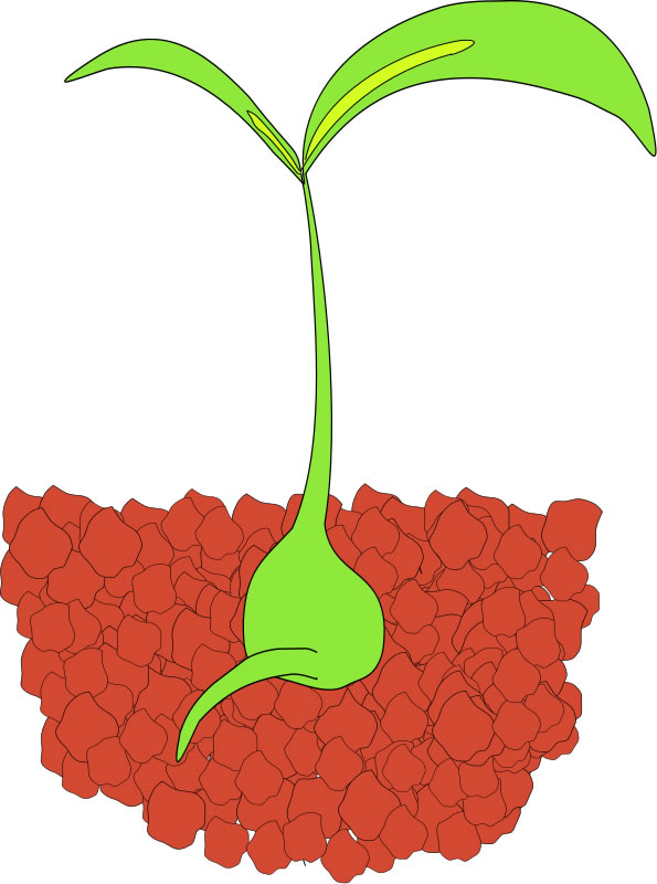 Sprout clipart flower bud. Panda free images prospectclipart