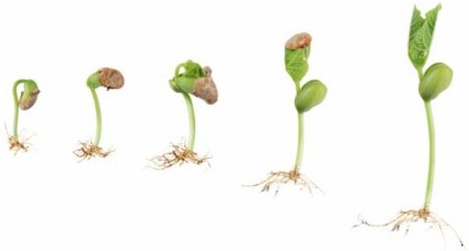 Sprout clipart grass seed. Hydroponic seeds getting started