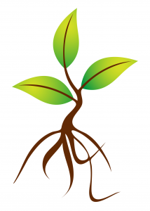 Sprout clipart leaf. Cliparts growing with god
