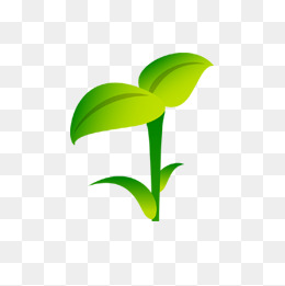 Sprout clipart plant shoot. Bean sprouts png images
