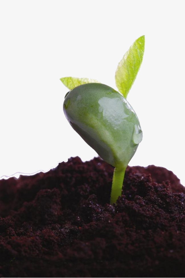 Sprout clipart plant shoot. Seedling soil young plants