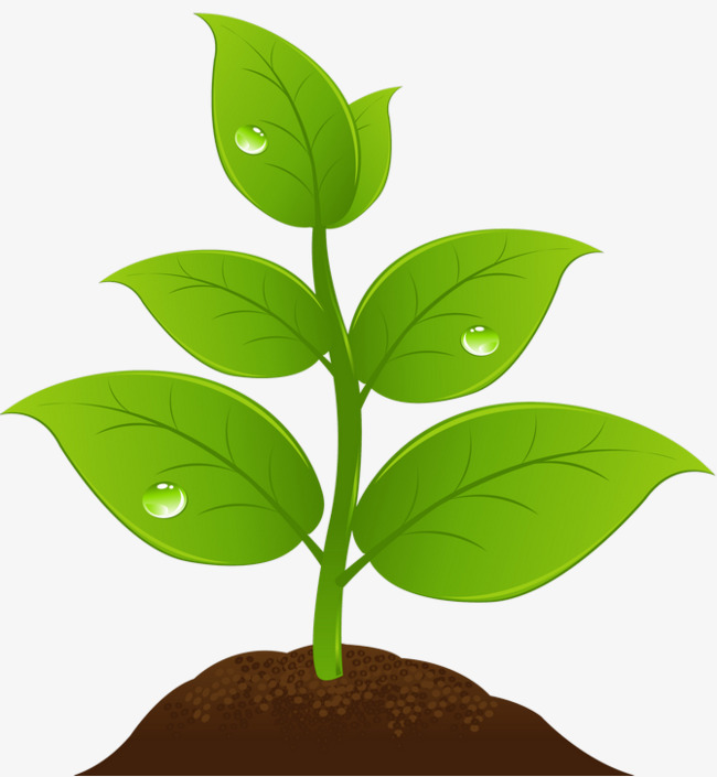 Sprout clipart tree sprout. Sprouting saplings sapling growing
