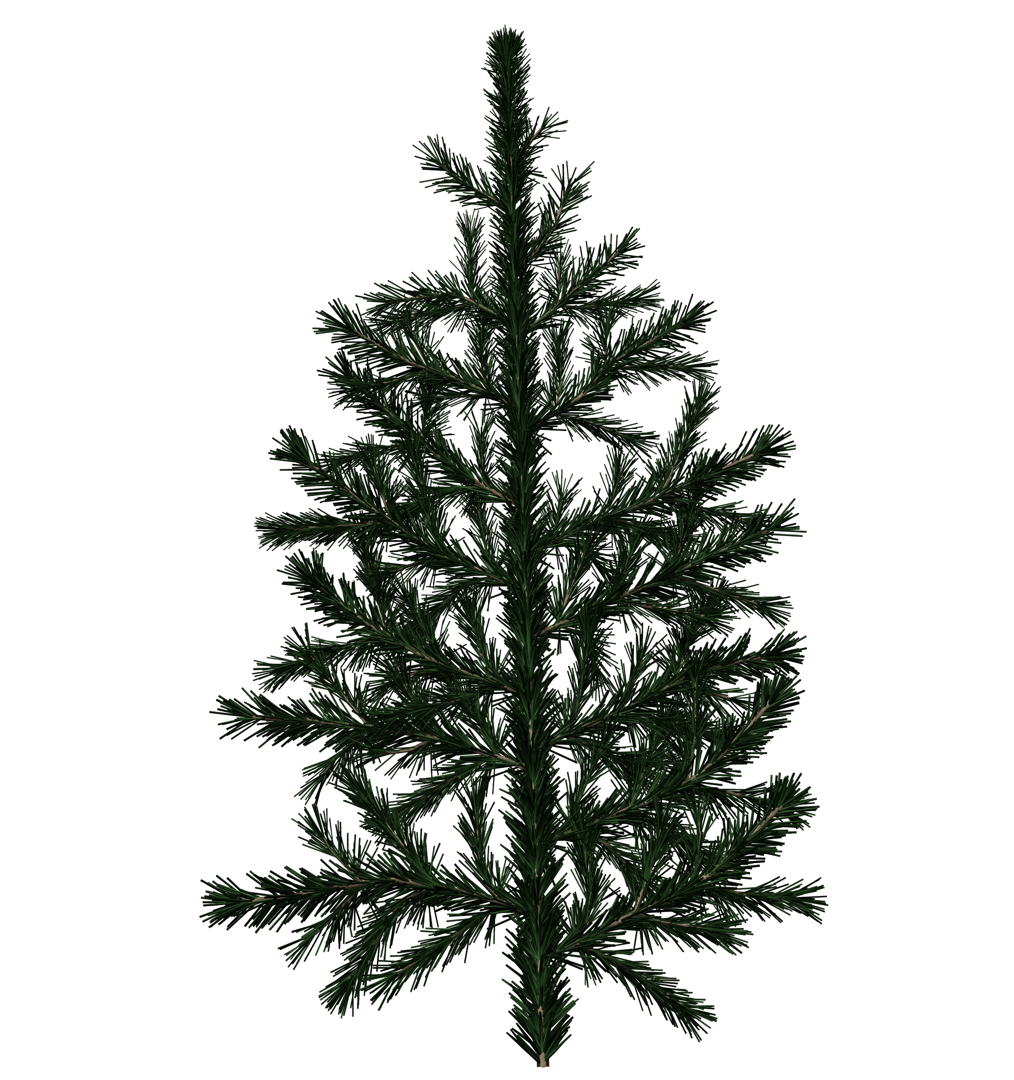 Pine tree texture png. Spruce branch sharecg view