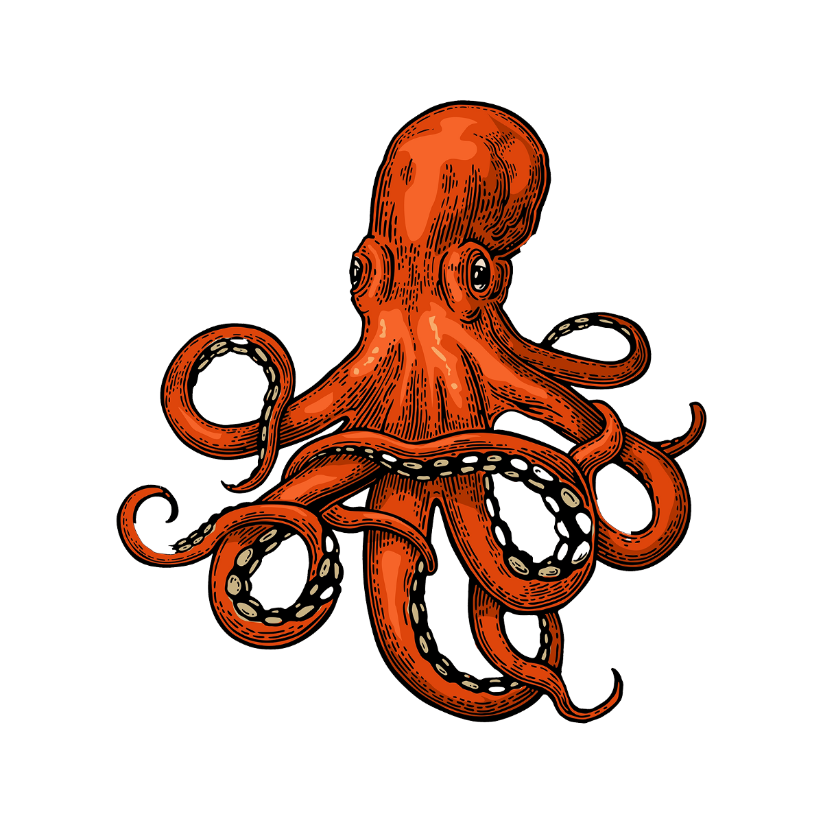 Squid drawing png. Octopus transprent free download