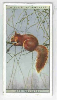 Squirrel clipart movie disney. Characters here s chatter