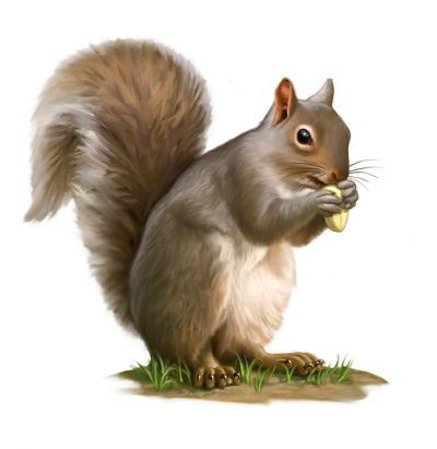 Squirrel clipart october season. Clipartaz free collection images