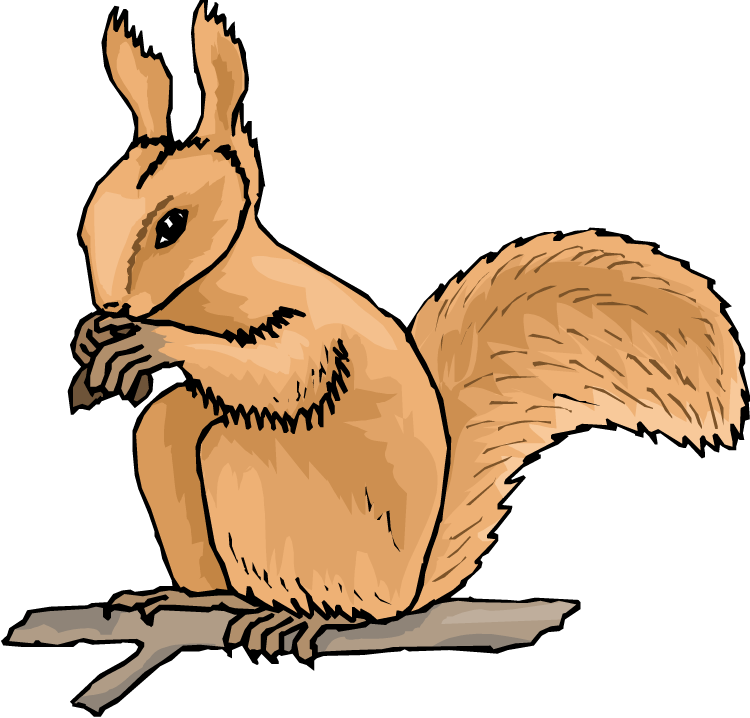Squirrel clipart september. Free picture of squirrels