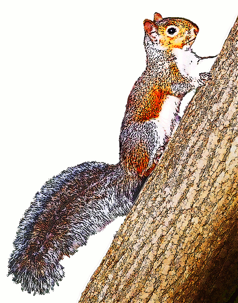 Squirrel clipart september. Free page of public