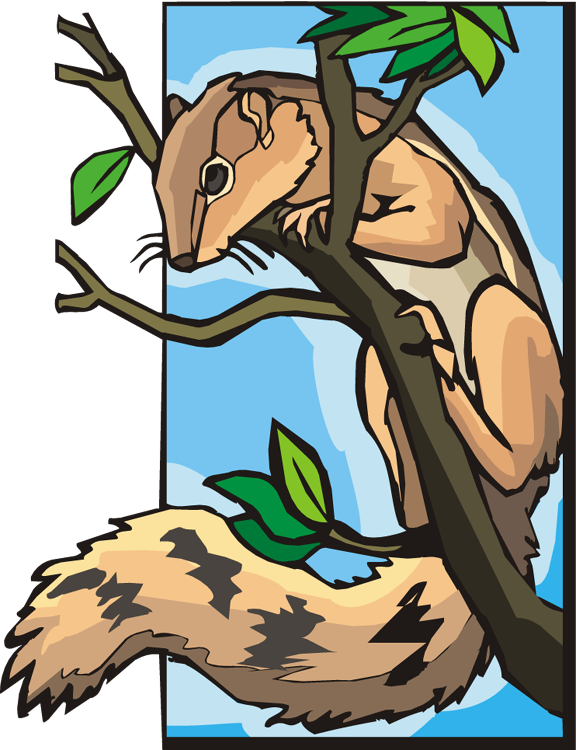 Squirrel clipart squirral. Free in a tree