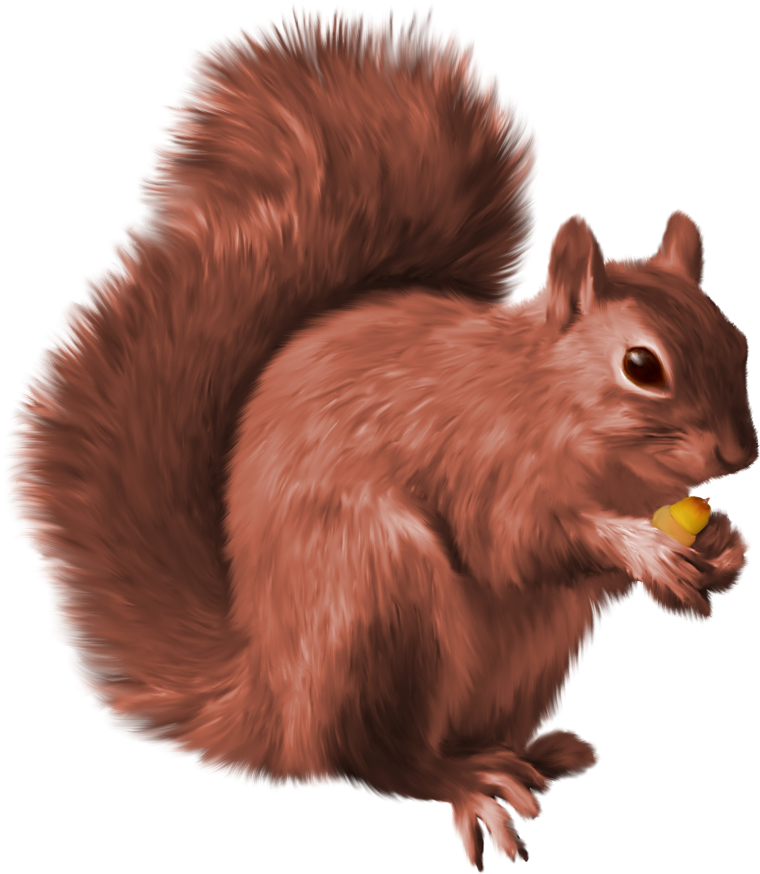 Vector squirrel illustration. Png nutcrackers pinterest and