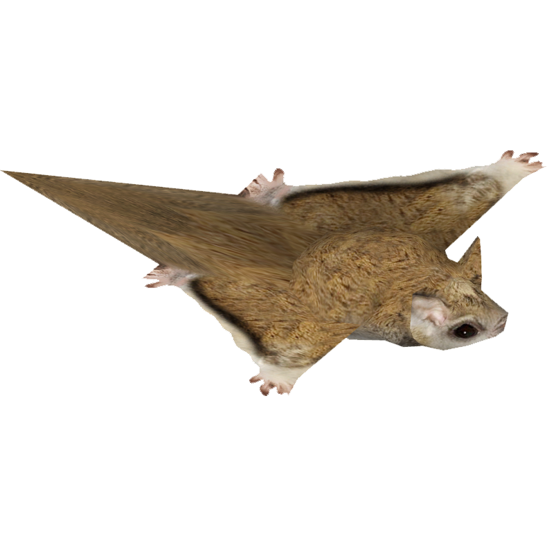 Flying squirrel png. Image northern tamara henson