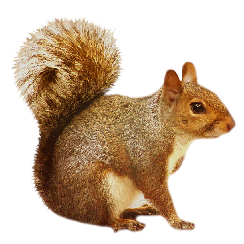 Squirrel png images. Transparent brown gallery yopriceville