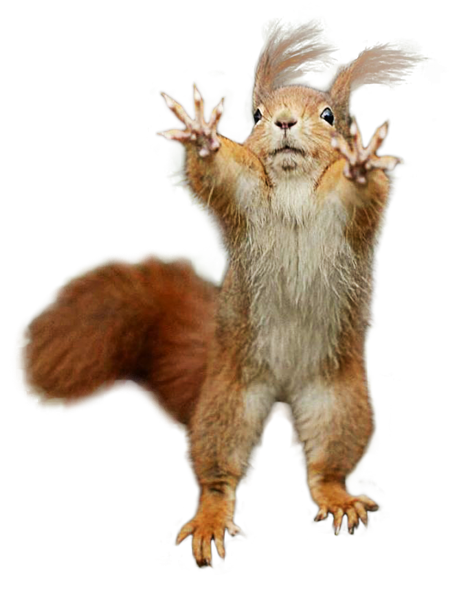 Squirrel standing png. Psbattle this photoshopbattles cutout