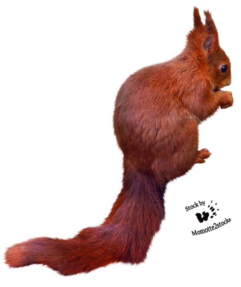 Squirrel with arms out png. Cut stock red by