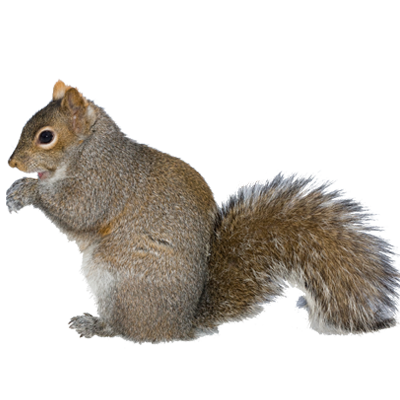 Squirrel with arms out png. Squirrels a exterminators