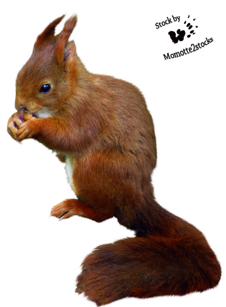 Squirrel with arms out png. Cut stock nice red