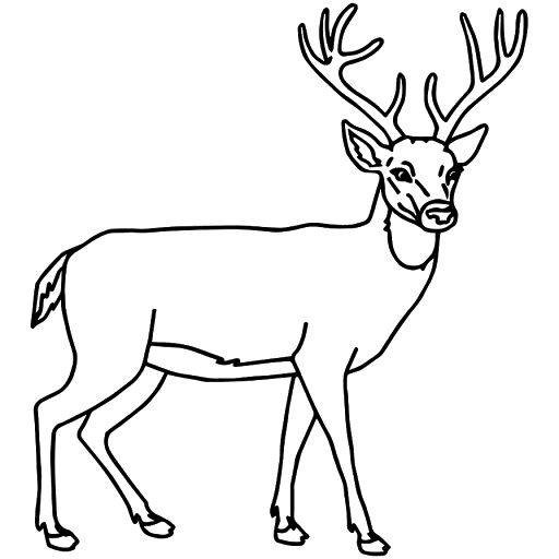 Stag Vector Kijang Transparent Png Clipart Free Download Ya