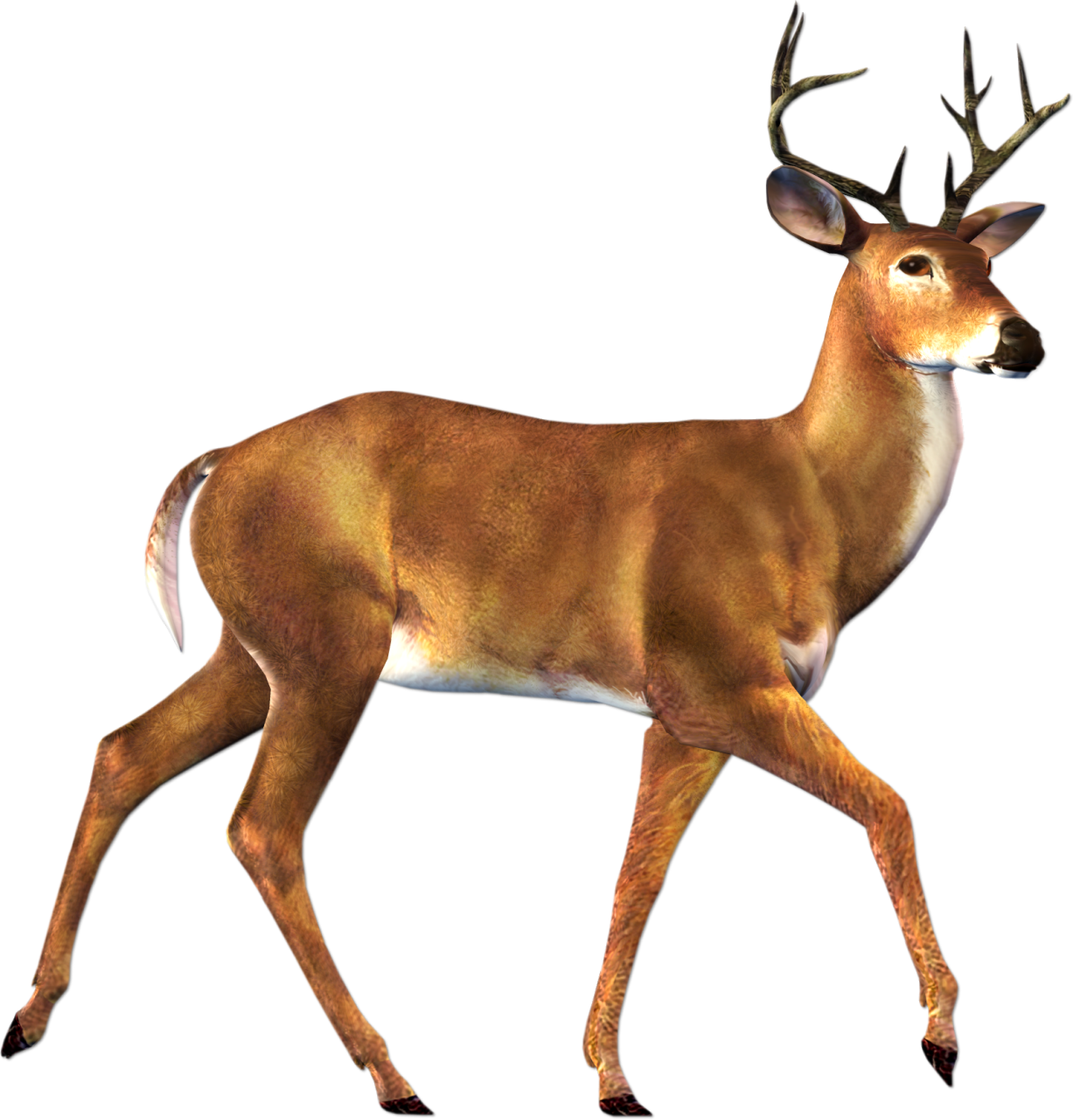 Stag vector pronghorn. Deer hd png transparent