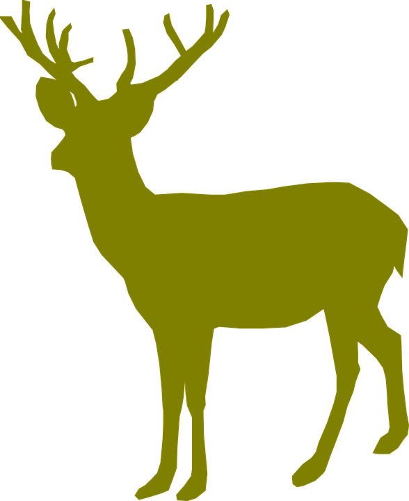 Stag vector whitetail deer. Graphics desktop backgrounds free