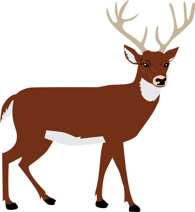 Stag vector wildlife. Free image on pixabay