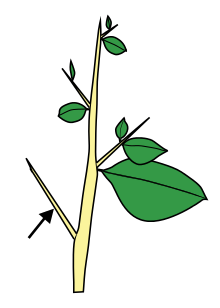 stick clipart twig leaves