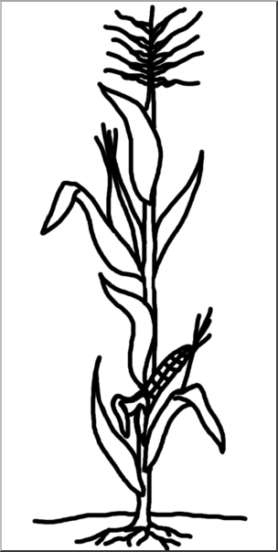 Stalk clipart plant. Corn drawing at getdrawings