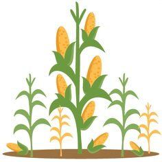 Crops clipart corn stalk. Free vector for download