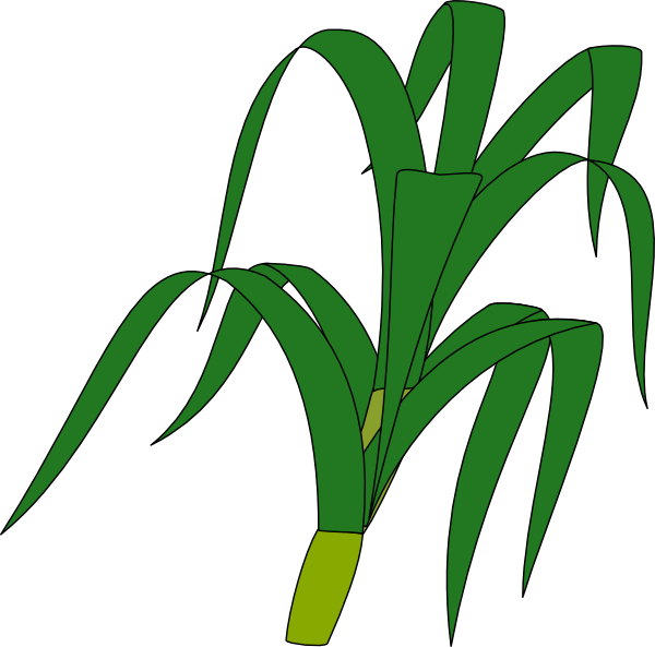 crops clipart corn stalk