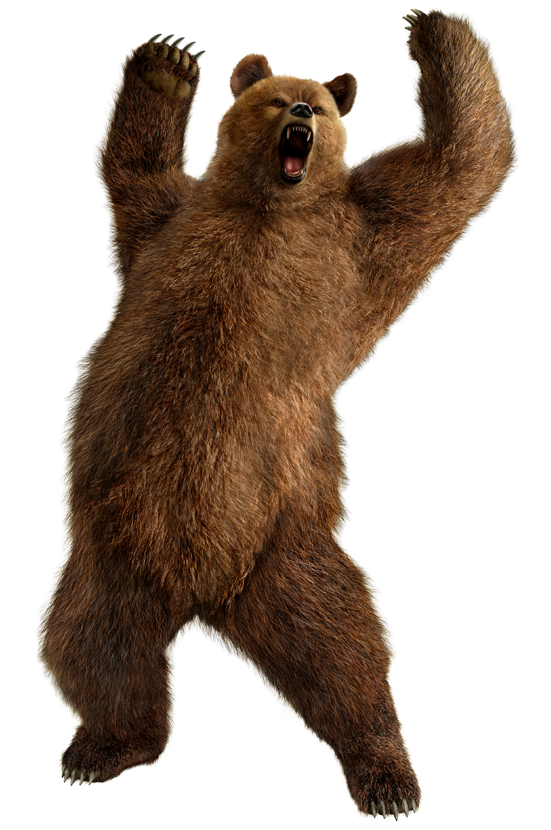 Standing bear png. Grizzly image purepng free